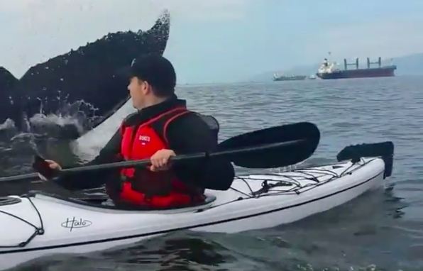 Video shows kayaker's close encounter with humpback whale at Jericho Beach