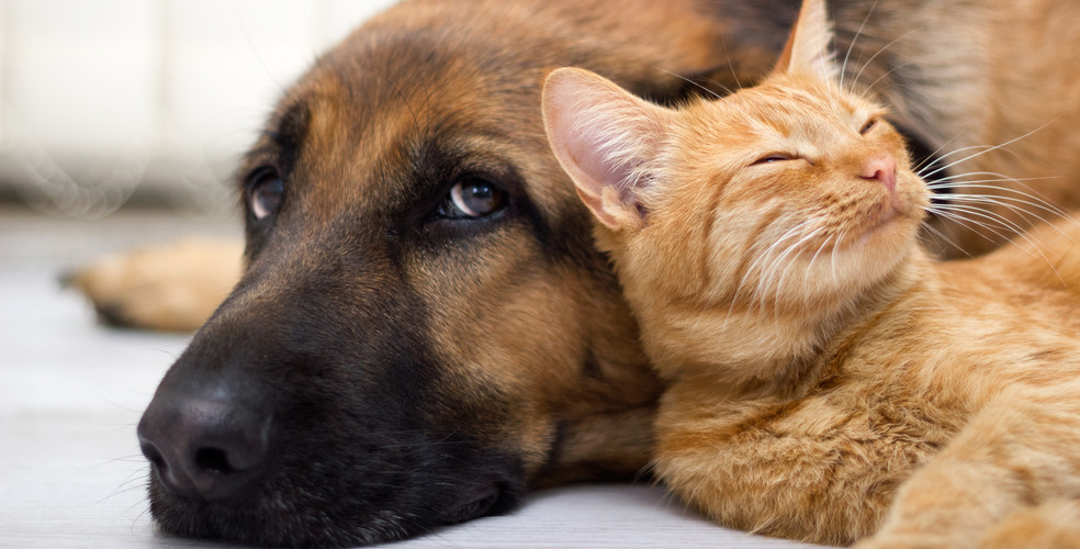 Dogs love us five times more than cats do, because science