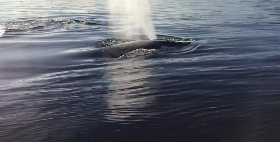 Amazing footage shows B.C. boater's close encounter with humpback whales (VIDEO)