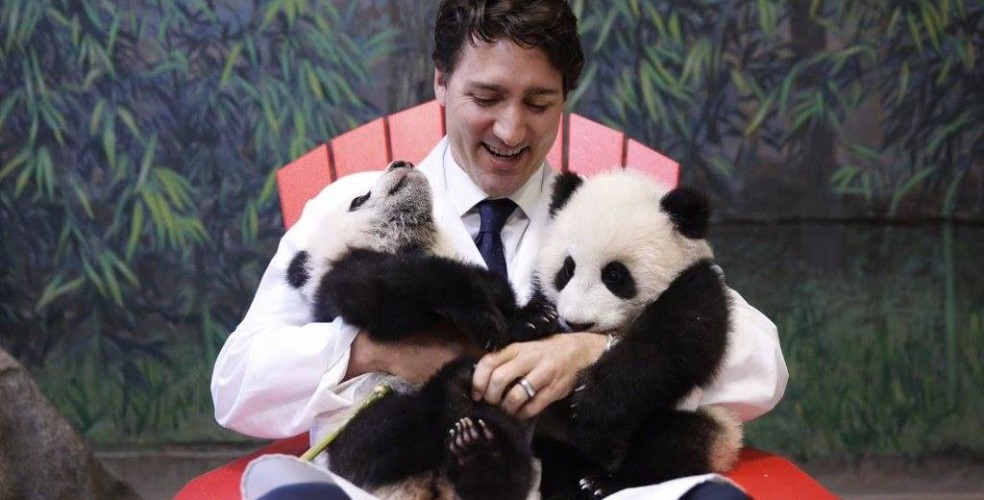 Justin Trudeau gets playtime with Toronto Zoo's panda cubs (PHOTOS)