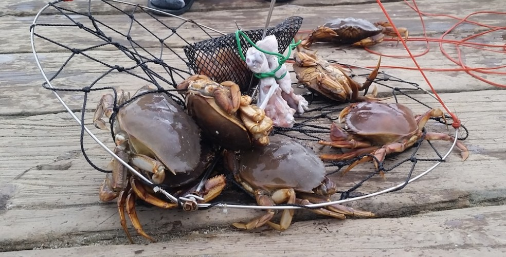Two men fined $3,300 for illegal crab fishing in North Vancouver