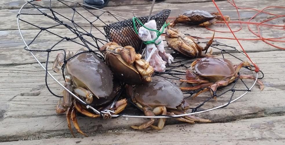 Crab fishing 984x500
