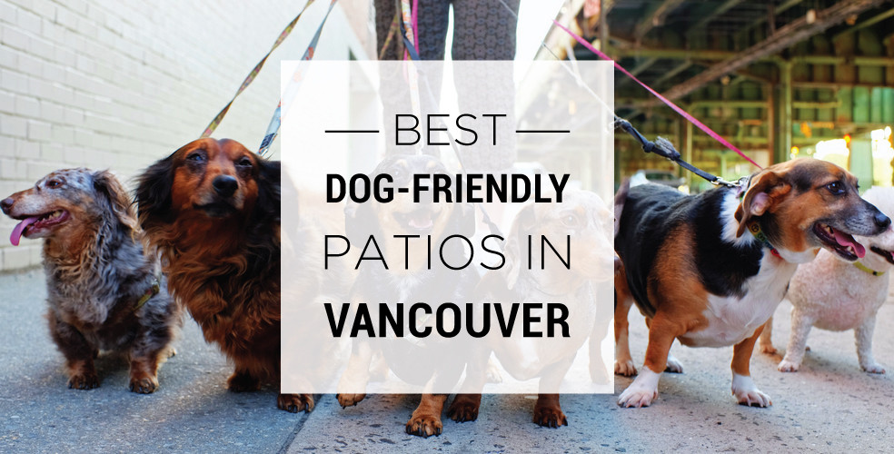 Best dog-friendly patios in Vancouver