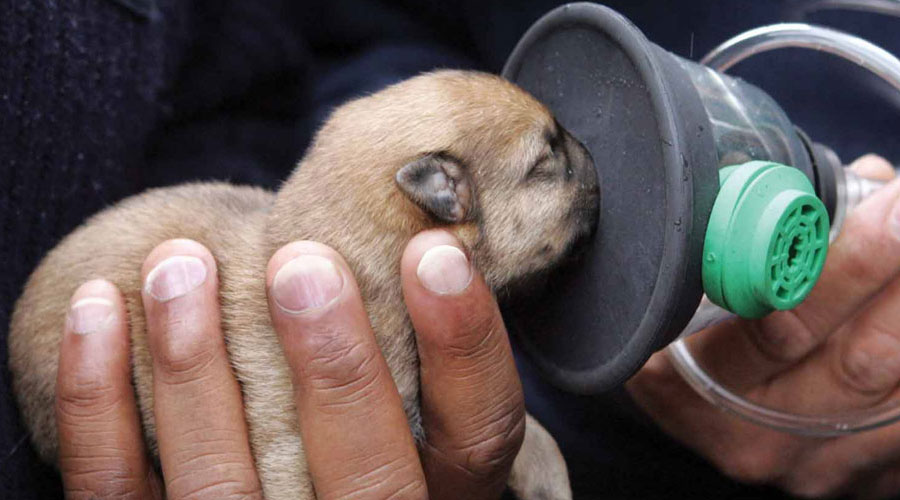 Loving legacy: Push for pet oxygen masks after fire that killed 9 animals