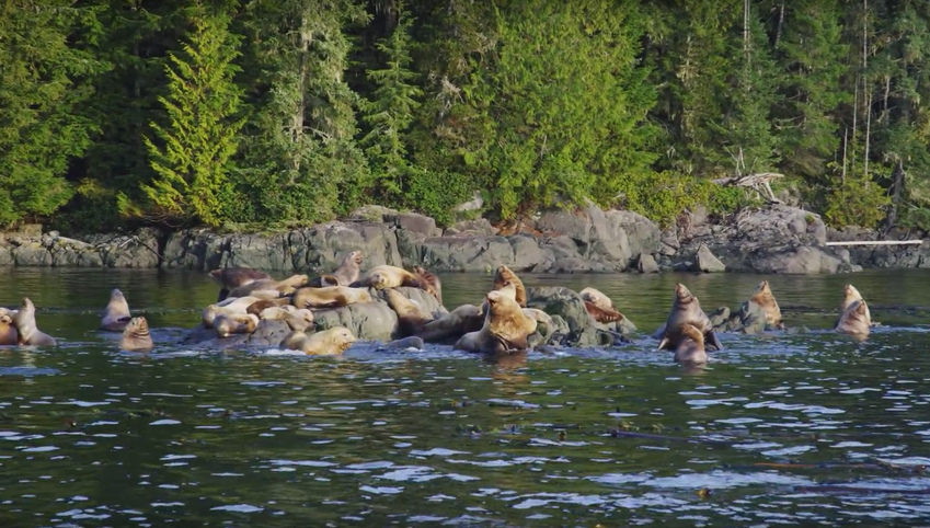 YouTube star captures breathtaking footage of Great Bear Rainforest (VIDEO)