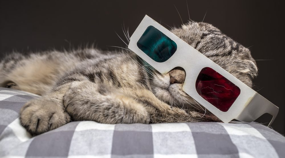 Just for Cats video festival coming to Vancouver this weekend