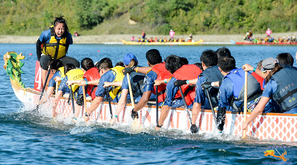 A race at the calgary dragon boat festival in 2015 jon lin flickr