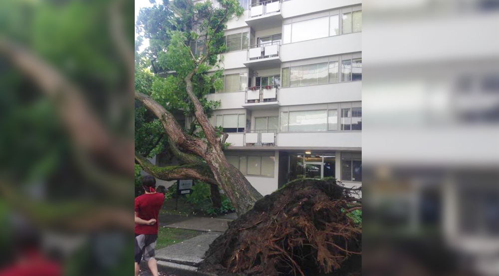Giant tree falls onto West End condo building