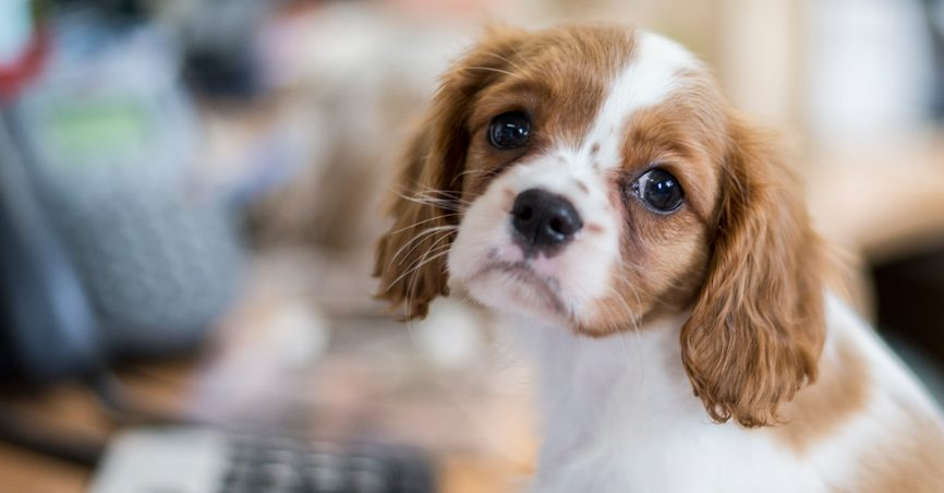 Send us pictures of your dogs at work for Take Your Dog to Work Day