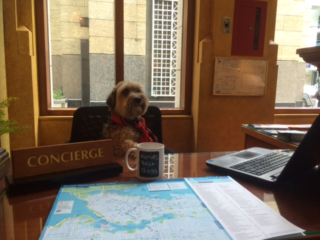 Harley Hotel Le Soleil's canine concierge for the day
