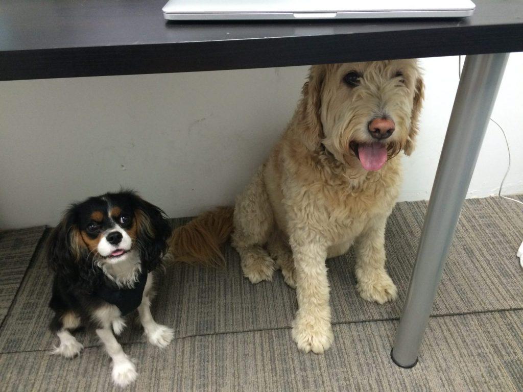 Rex and Lloyd at at ePACT Network via Elora Chow