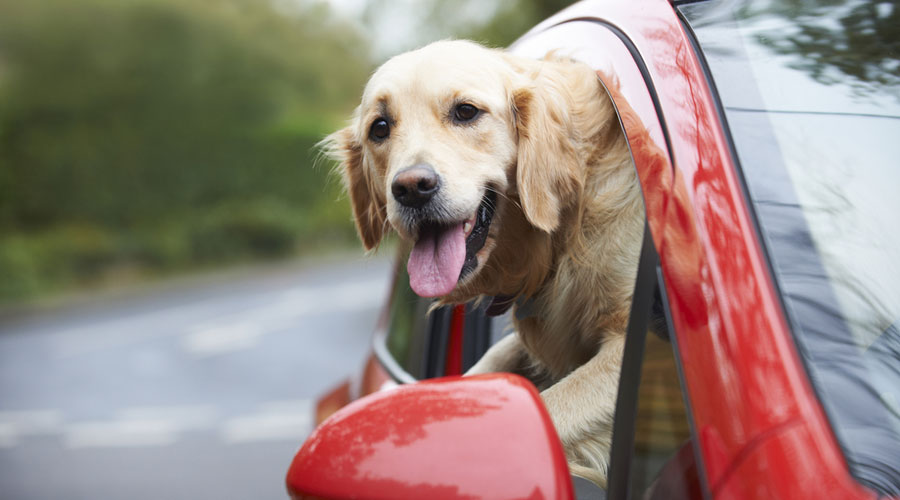 Essential gear for road tripping with your dog this summer