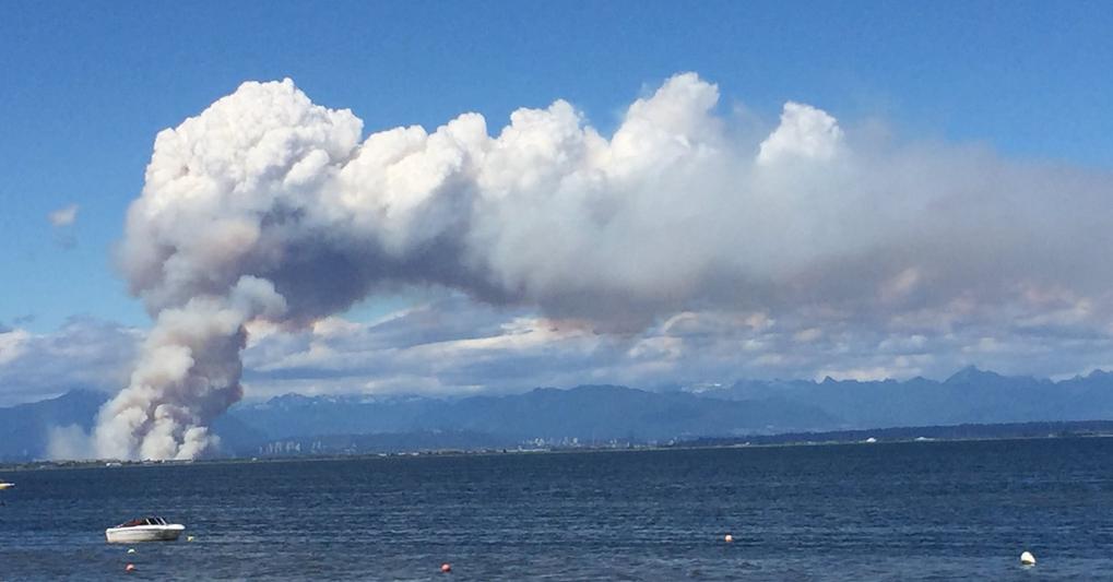 Massive fire in Burns Bog in Delta