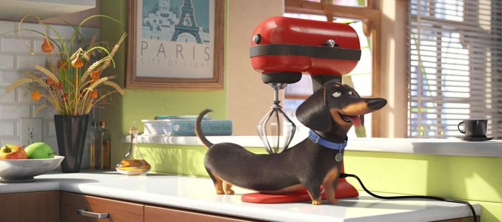 The Secret Life of Pets - Movie Review - Dan Nicholls - Daily Hive