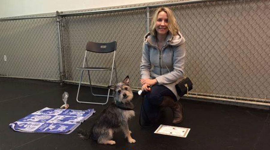 Seymour graduating Life Skills class at Dizine Canine.