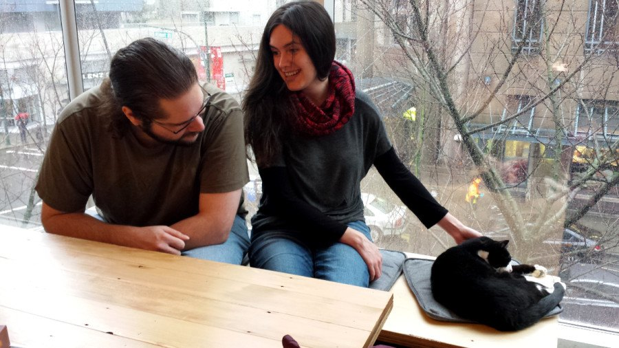 Catfé: First Vancouver cat cafe opens today bringing coffee and cat lovers together (PHOTOS)