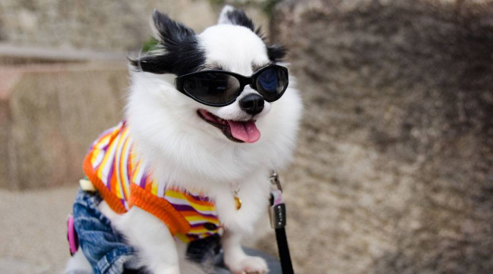 10 coolest summer duds for dogs