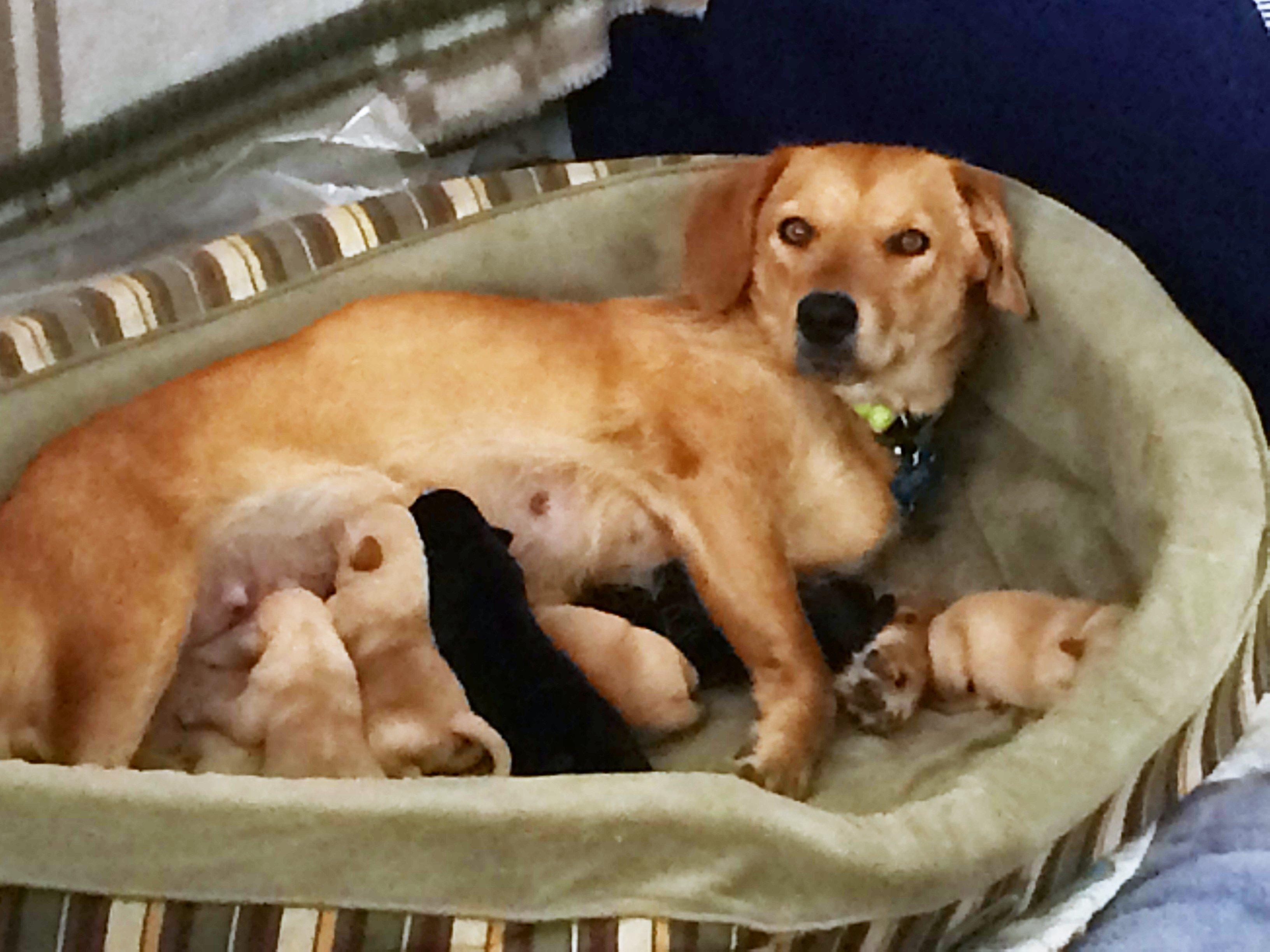 Ruby post birth