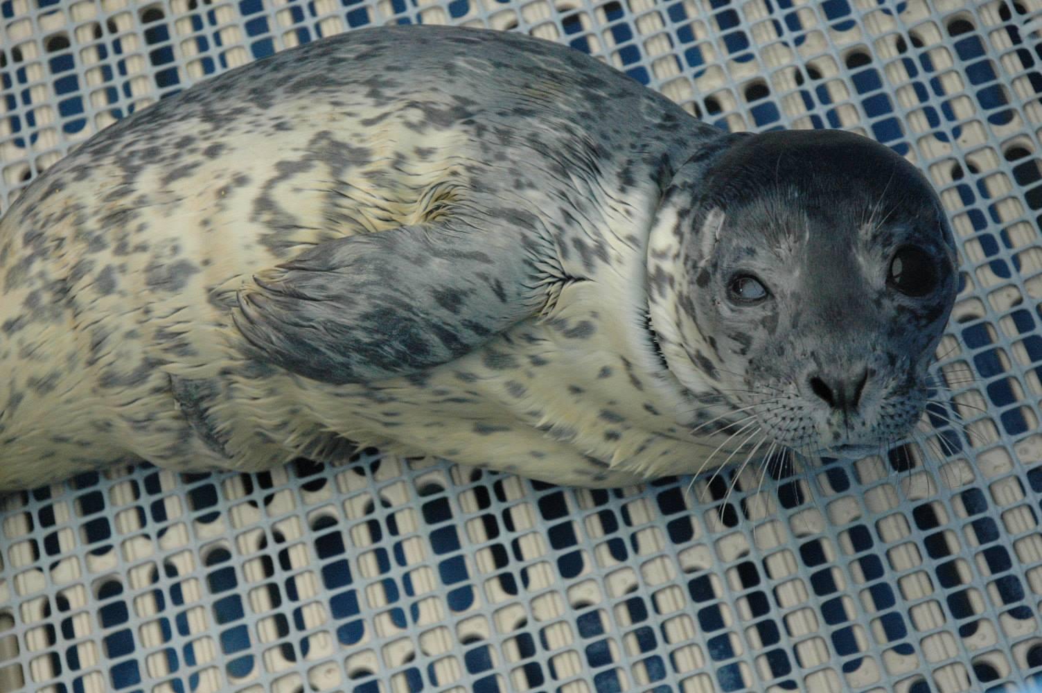 Lou seal1