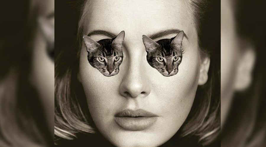 Adele cat face