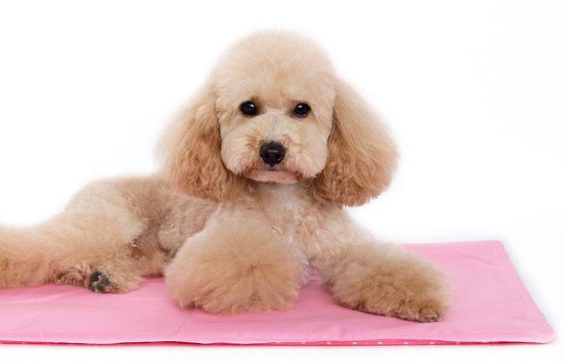 iCool pet mat from Barking Babies. (Barking Babies)
