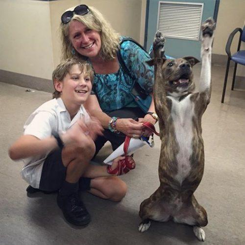 Image: Lort Smith Animal Hospital