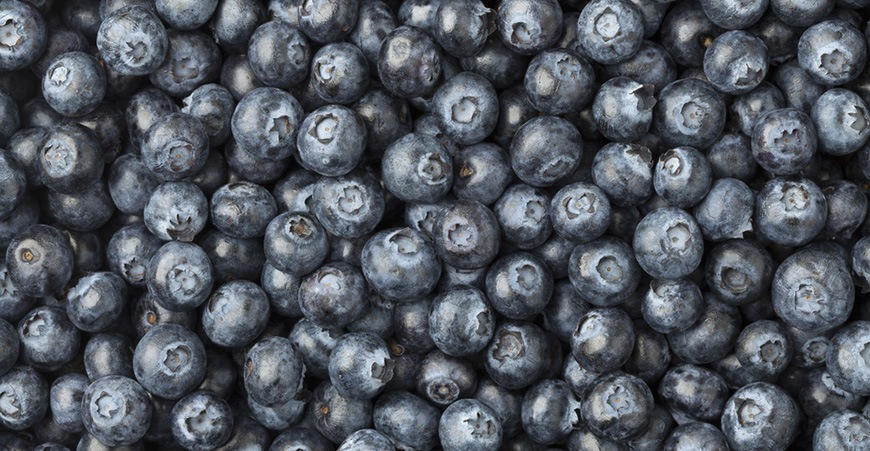 Where to go blueberry picking in Metro Vancouver
