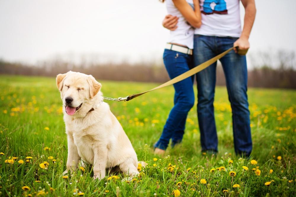 Dog walk / Shutterstock