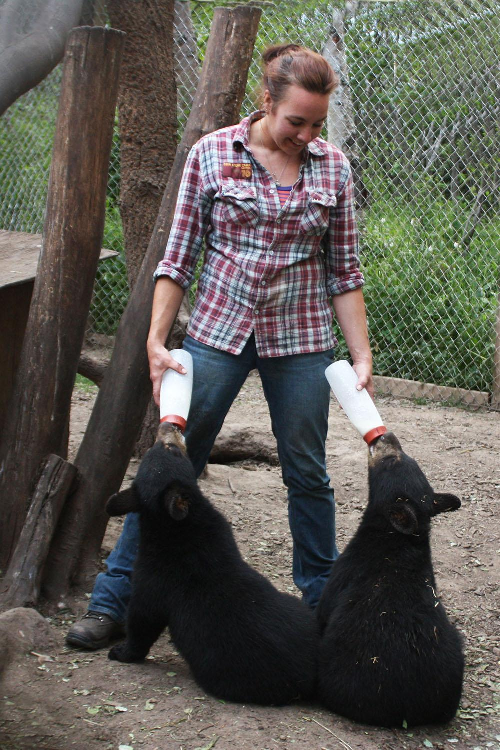 Northern Lights Wildlife Shelter volunteer Kim Gruijs bottle-feeds two orphan black bears. (Northern Lights Wildlife Shelter)