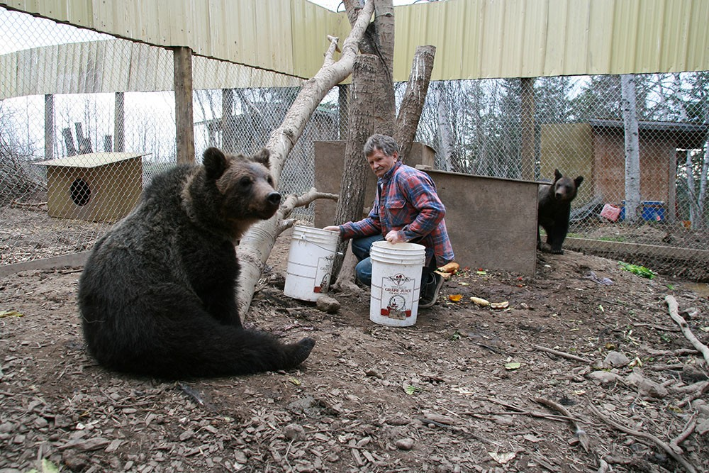 Northern Lights Wildlife Shelter co-founder Peter Langen feeds the grizzlies at his unique facility in Smithers, BC (Northern Lights Wildlife Shelter)