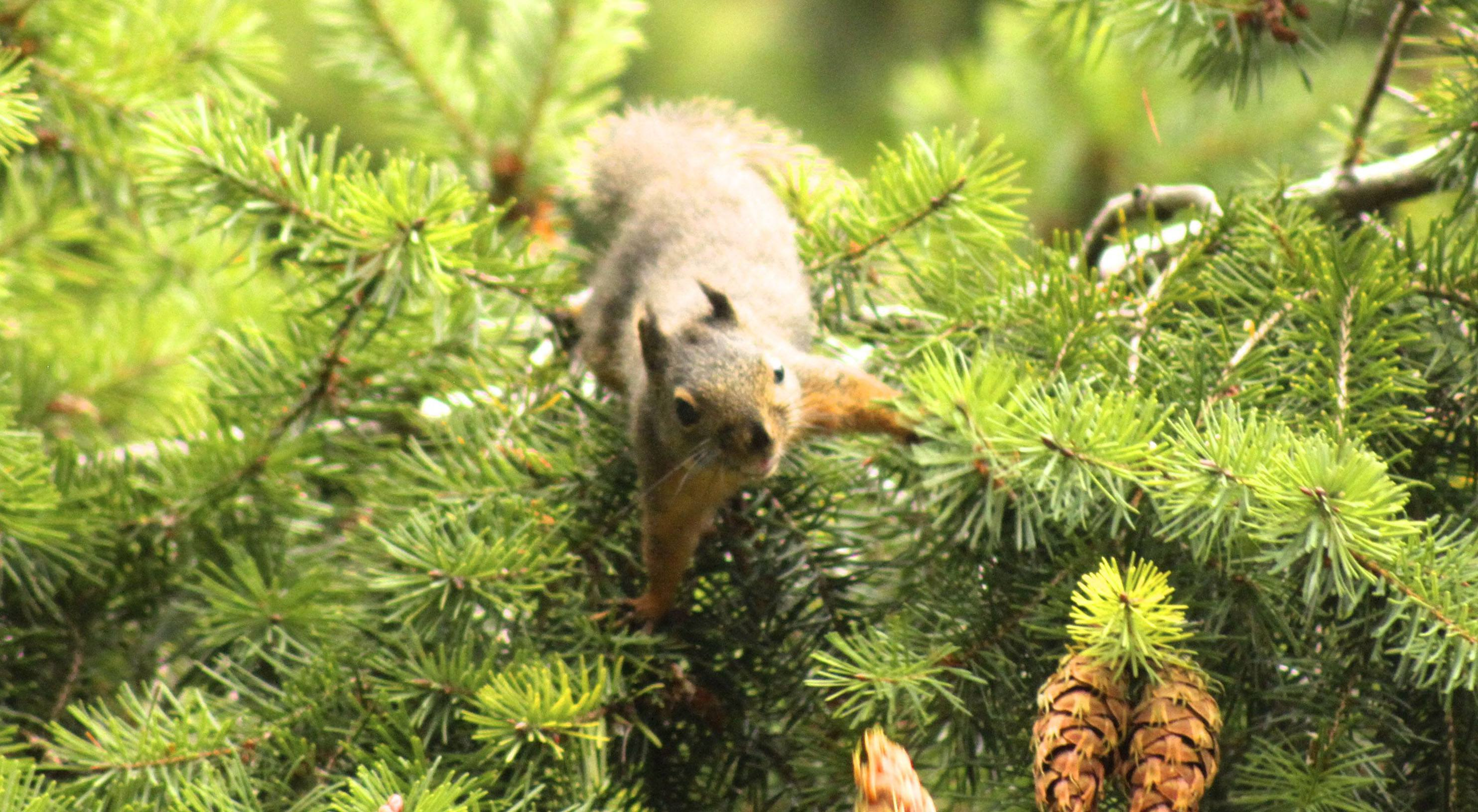 Wif 2016 lori clark douglas squirrel