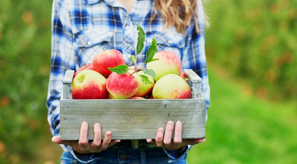 6 places to go apple picking around Montreal