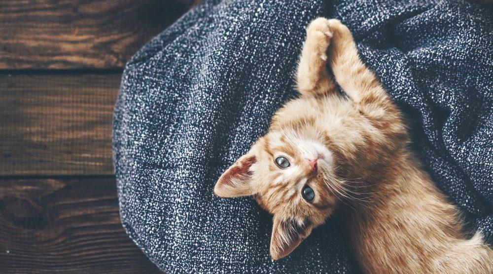 Kitten e1470694110283