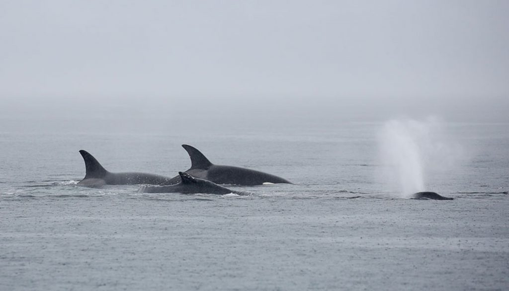 Image: Pacific Whale Watch Association