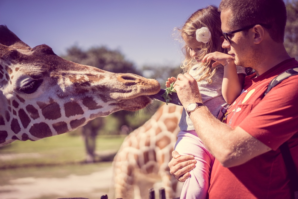 Calgary Zoo offers families plenty to see and do this season