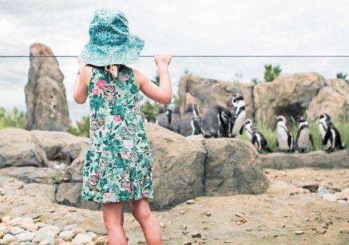 Image: Calgary Zoo
