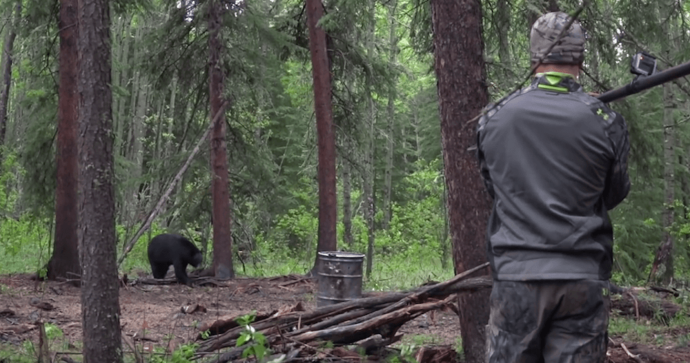 Online video of hunter spearing a bear in Alberta sparks outrage