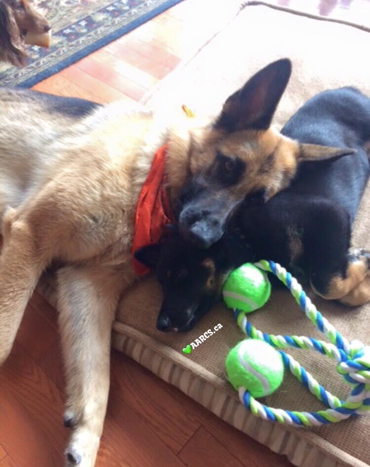 Alberta Animal Rescue Crew Society / Facebook