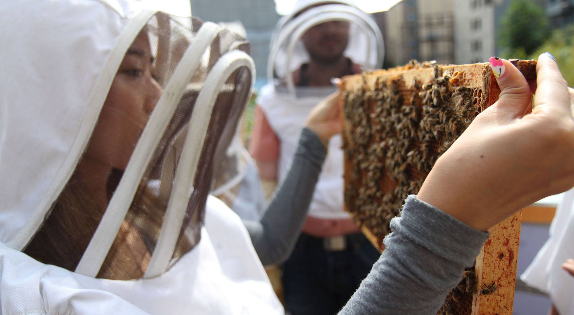 Honey bees inspire Vancouver tech startup Routific