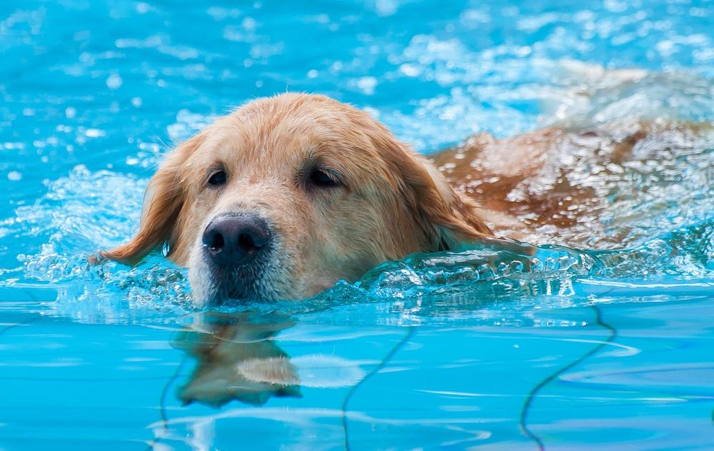 Dog swimming/Shutterstock