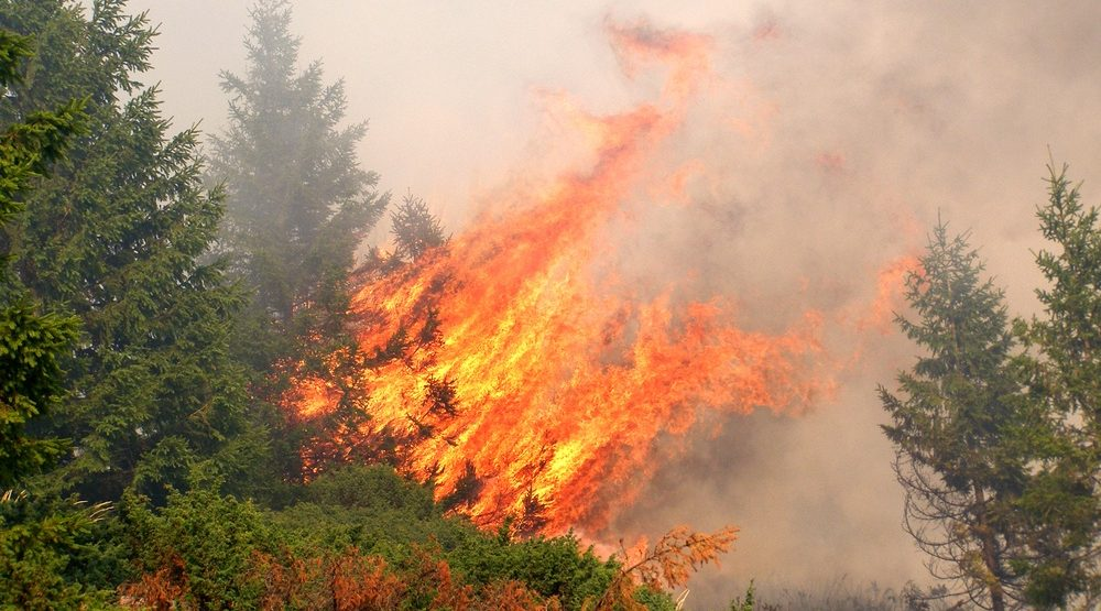 "All of Lower Mainland is at ""extreme danger"" for wildfires"