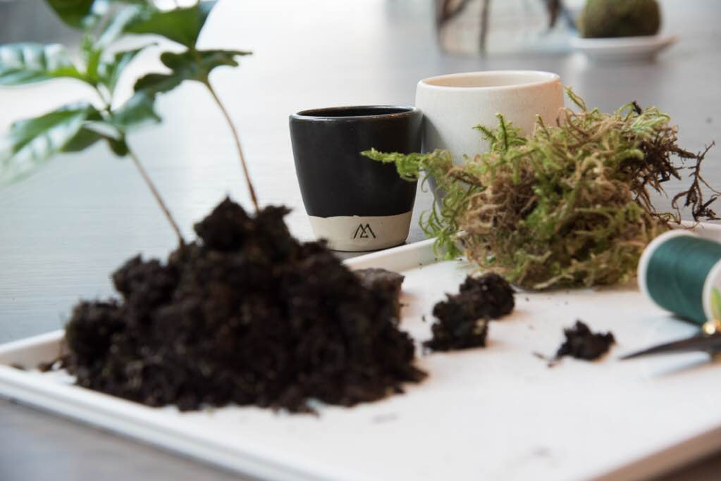 Make your own kokedama at a workshop in Calgary