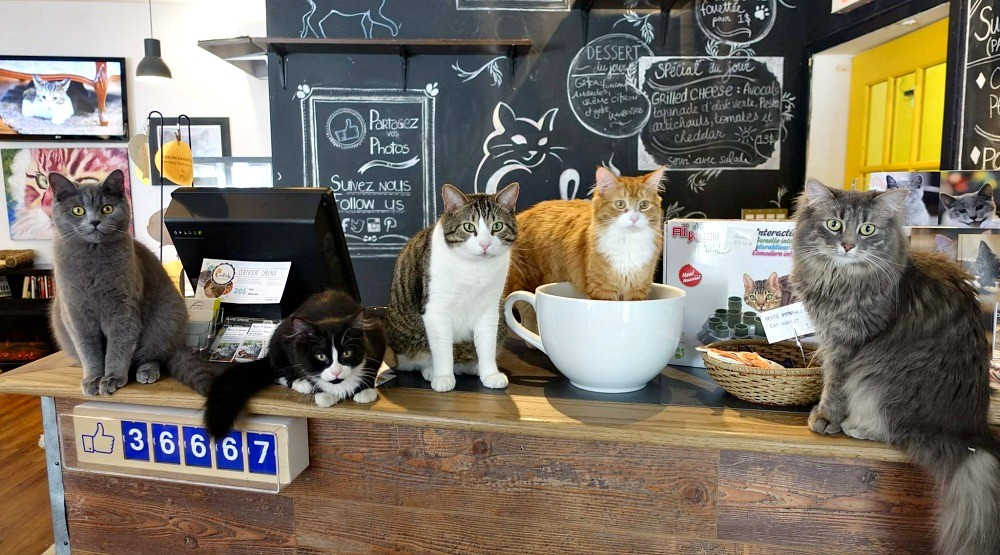 This Montreal spot will let you play with cats while you drink your coffee