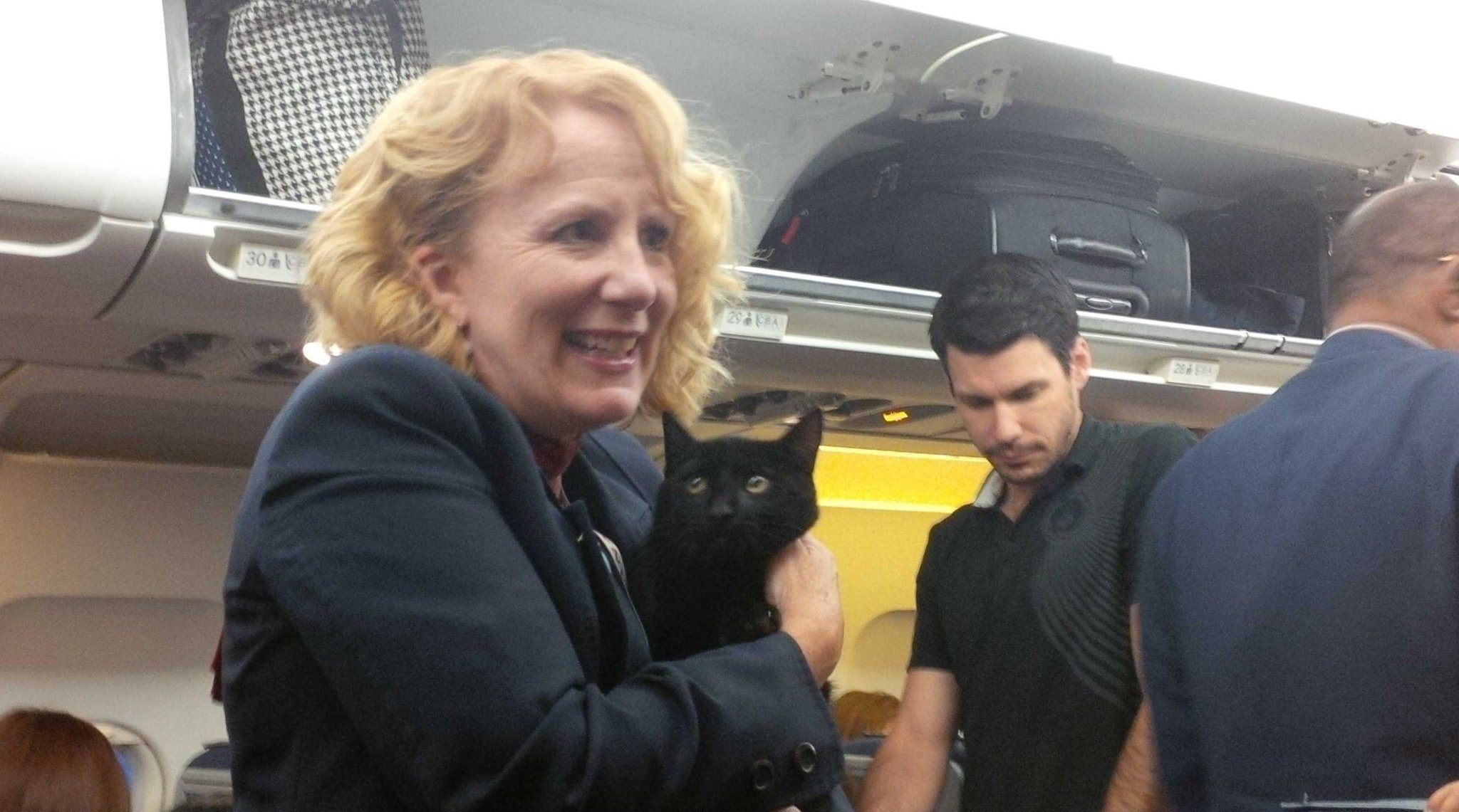 'Catastrophe averted by a whisker' - Rogue kitty cat escapes from crate on Vancouver-bound flight