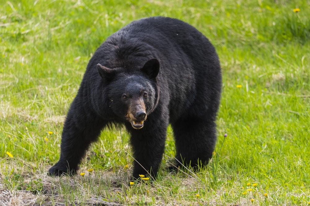 Province warns of dangers ahead as bear season looms