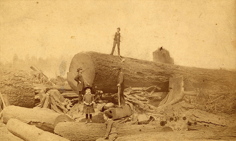 1886: A giant Douglas fir felled at the intersection of Granville and Georgia. (Vancouver Archives)