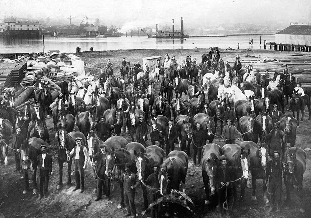 1897: Taken from today's Hinge Park, construction crews and their work horses pose for a group photo. (Vancouver Archives)