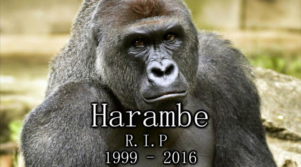 Montreal is hosting a march for Harambe this Saturday