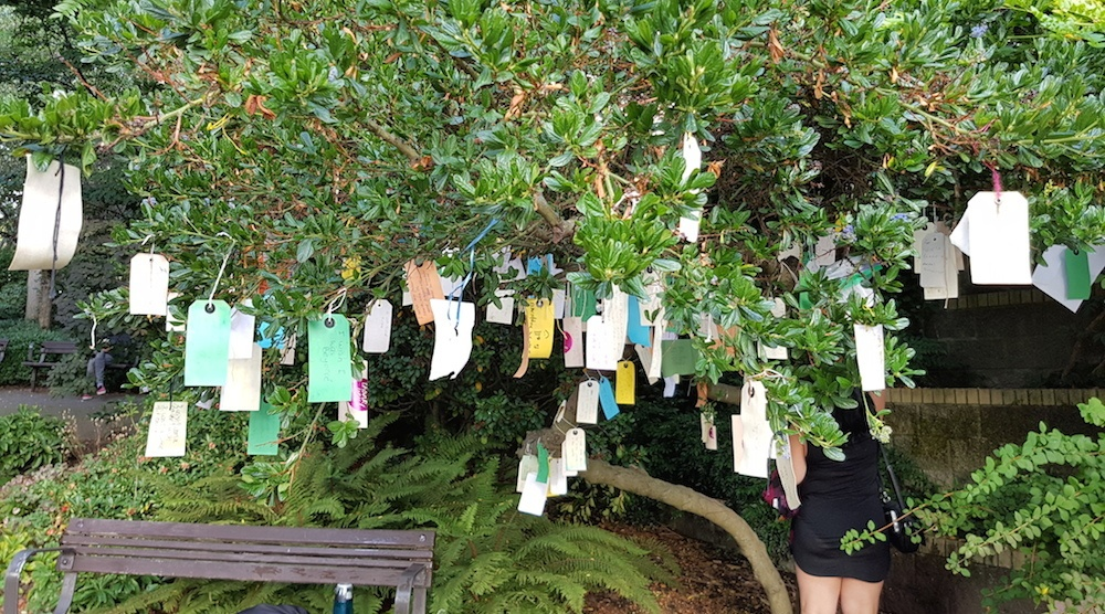 Vancouver West End wishing tree blooms with hundreds of messages (PHOTOS)