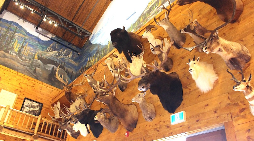 Peek inside Bass Pro Shops' epic new Outdoor World store, 1st in BC (PHOTOS)